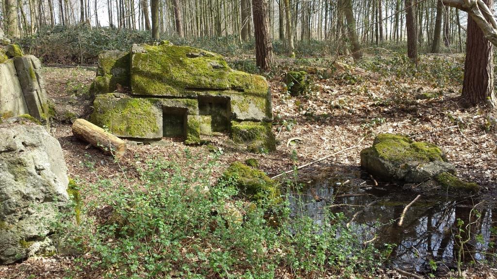 Gasthuisbossen pad: een verhaal langs bosdomeinen en oorlog