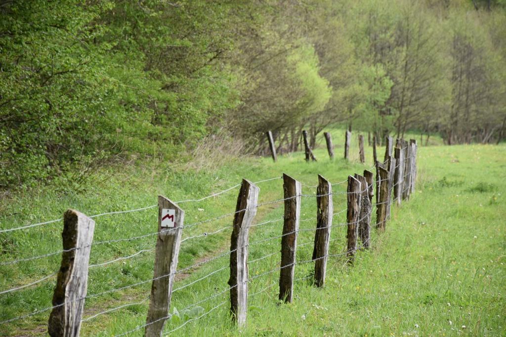 De fantastische wandelwereld van het Mullerthal