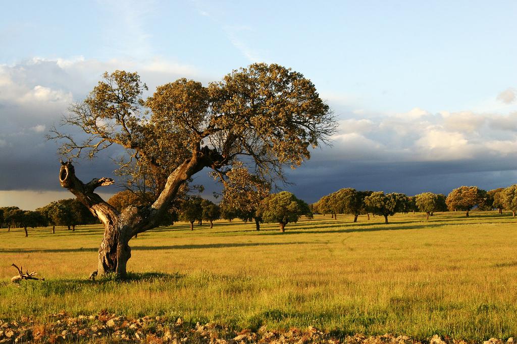 Extremadura, de ongerepte Spaanse parel