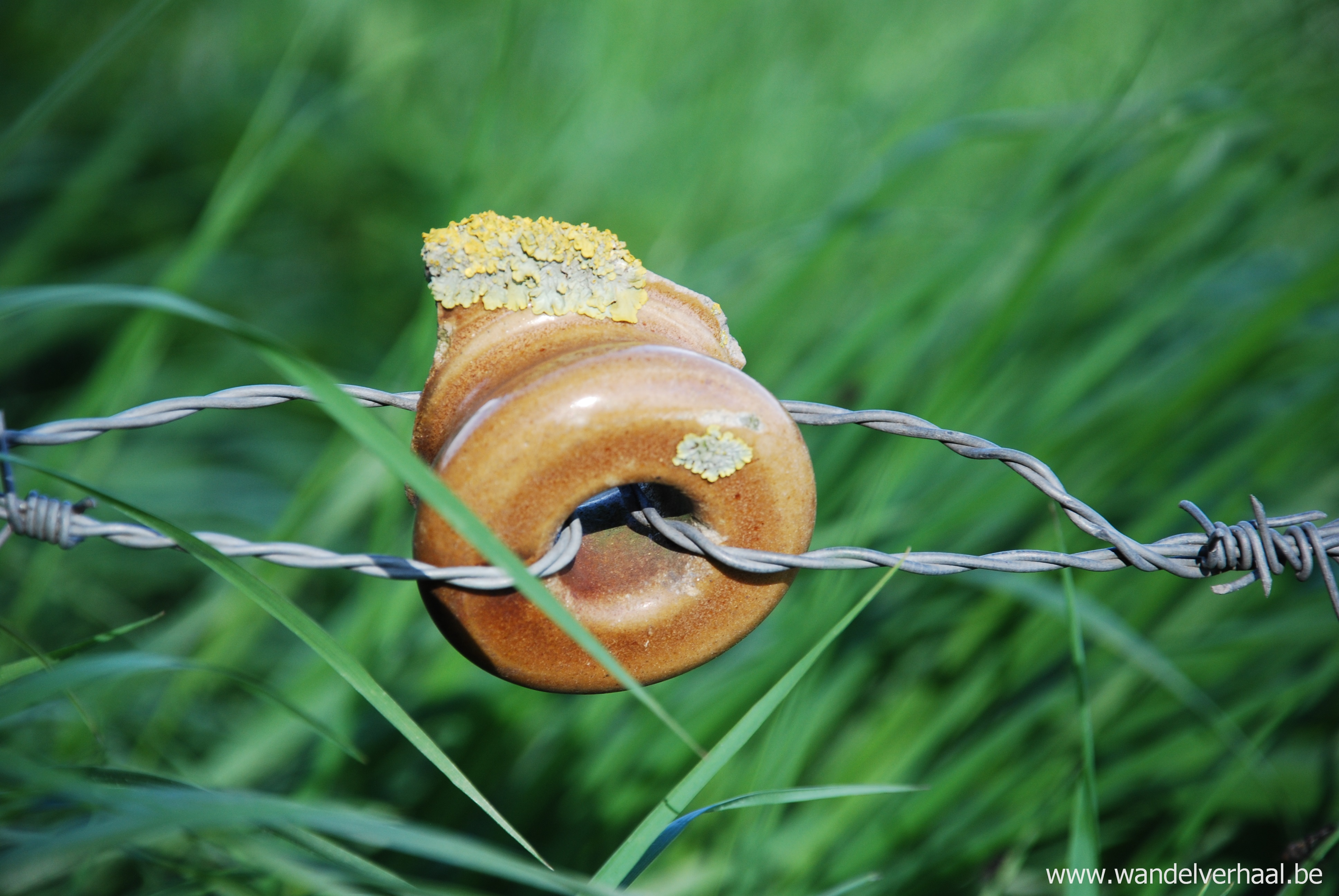 Flessenhals van rumkruik vormt thans het landschap