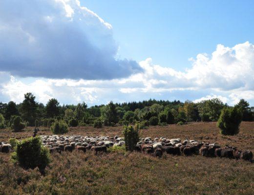 Wandelen in en rond de 9 romantische stadjes in Nedersaksen